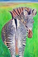 zebra, 5/9/06, 9:23 PM,  8C, 4968x7412 (703+368), 100%, Default Settin,  1/15 s, R53.3, G45.3, B86.6