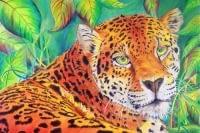 tiger, 2/28/06, 2:01 PM,  8C, 5371x7804 (334+138), 100%, Default Settin,  1/20 s, R90.4, G85.8, B125.0